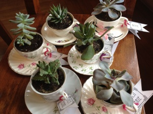 Teacup succulants